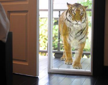 Adesivi da finestra no.127 banyan tiger