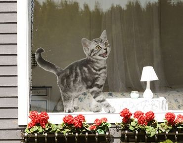 Adesivi da finestra no.132 Kitty
