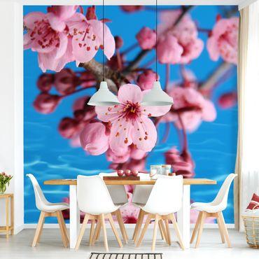 Carta da parati adesiva - fiore di ciliegio- Formato quadrato