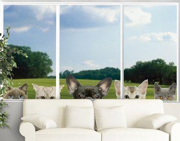 Adesivi da finestra No.273 Cats With Puppy Dog Eyes