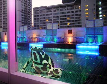 Adesivi da finestra No.280 Zebra Frog