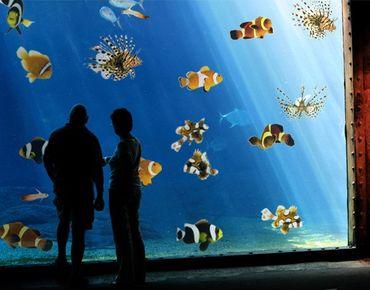 Adesivi da finestra no.390 Tropical Fishes Set