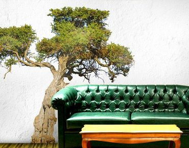 Adesivo murale no.394 Olive Tree