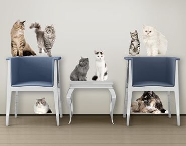 Adesivo murale no.417 Cat's Gang