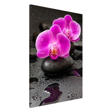 Lavagna magnetica - Pink Orchid Fiori Sulle Pietre Con Le Gocce - Formato verticale 2:3