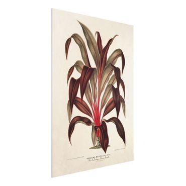 Stampa su Forex - Botanica Vintage Illustrazione del drago Albero - Verticale 4:3