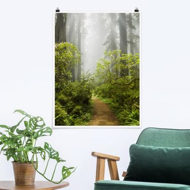 Poster - Percorso Misty Foresta - Verticale 4:3