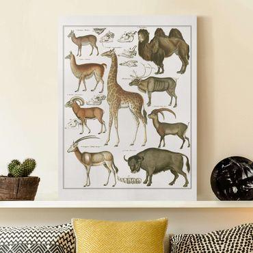 Stampa su tela - Vintage Consiglio giraffa, cammello e Llama - Verticale 4:3