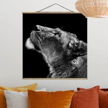 Foto su tessuto da parete con bastone - Ritratto di una leonessa - Quadrato 1:1