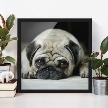 Poster con cornice - Pug Loves You - Quadrato 1:1