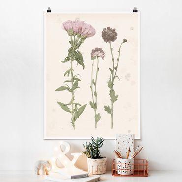 Poster - Herbarium In Pink III - Verticale 4:3