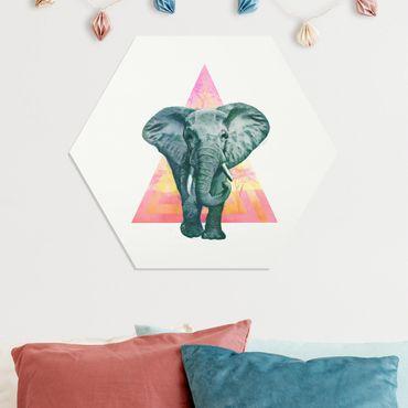 Esagono in forex - Illustrazione Elephant anteriore Triangolo Pittura