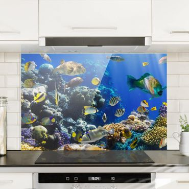 Paraschizzi in vetro - Underwater Reef