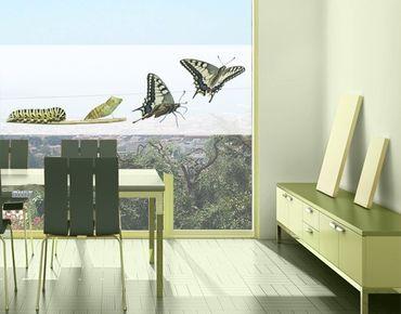 Decorazione per finestre Metamorphosis
