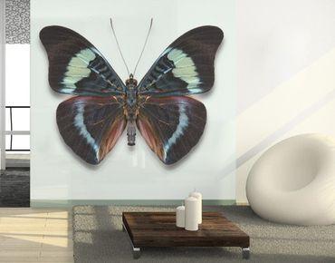 Decorazione per finestre Lepidoptera