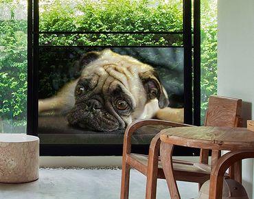 Decorazione per finestre Meditative Pug