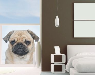 Decorazione per finestre Portrait Of Pug