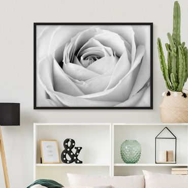 Poster con cornice - Close Up Rose - Orizzontale 3:4