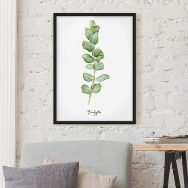 Poster con cornice - Watercolor Botany Eucalyptus - Verticale 4:3