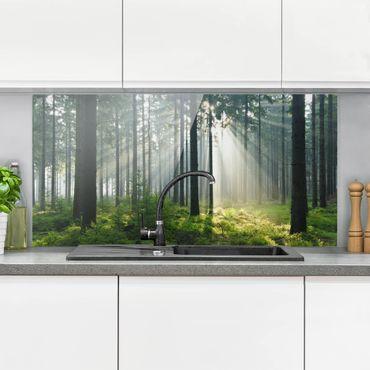 Paraschizzi in vetro - Enlightened Forest