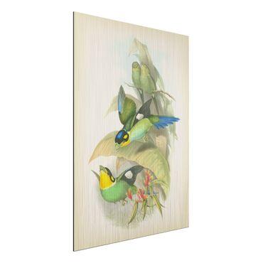 Stampa su alluminio spazzolato - Illustrazione Vintage Uccelli tropicali - Verticale 4:3