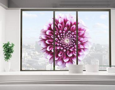 Decorazione per finestre Aster