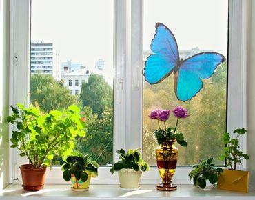 Adesivi da finestra no.444 Blue Morpho