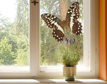 Adesivi da finestra no.447 Nymphalidae In Earth Tones