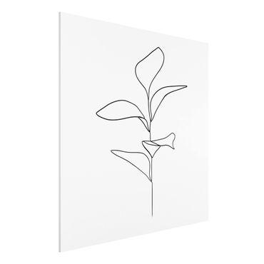 Stampa su Forex - Line Art foglie delle piante Bianco e nero - Quadrato 1:1