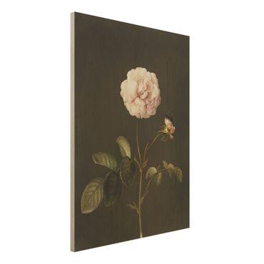 Stampa su legno - Barbara Regina Dietzsch - Rosa Gallica Con Bumblebee - Verticale 4:3