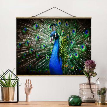 Foto su tessuto da parete con bastone - Peacock Noble - Orizzontale 3:4