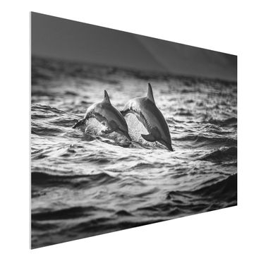 Quadro in forex - Due delfini che saltano - Orizzontale 3:2