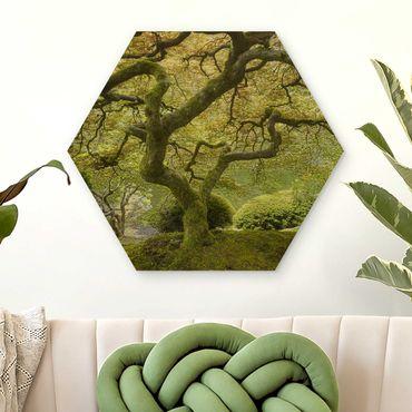 Esagono in legno - Verde Giardino Giapponese