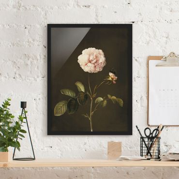Poster con cornice - Barbara Regina Dietzsch - Rosa Gallica Con Bumblebee - Verticale 4:3