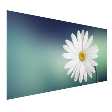 Quadro in forex - Daisies Close Up - Orizzontale 2:1