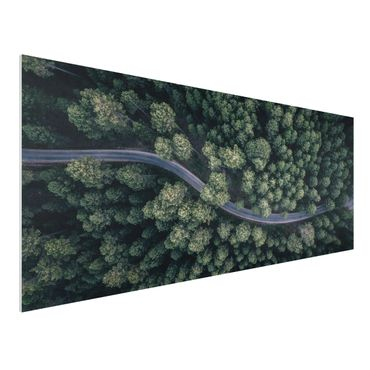 Quadro in forex - Veduta aerea - Forest Road From The Top - Panoramico