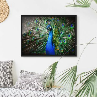 Poster con cornice - Noble Peacock - Orizzontale 3:4
