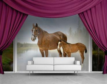 XXL Pellicola per vetri - Mare & Foal