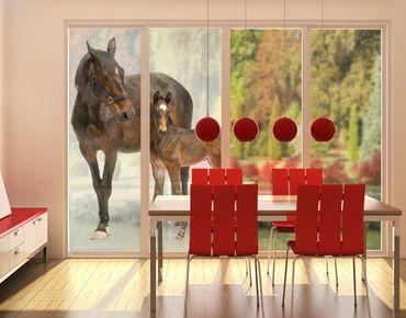 XXL Pellicola per vetri - Trakehnermare & Foal