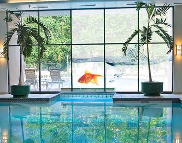 XXL Pellicola per vetri - Goldfish