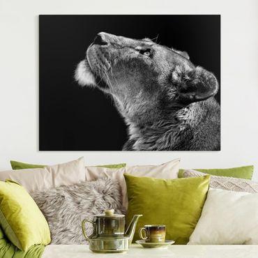Stampa su tela - Ritratto di una leonessa - Orizzontale 4:3