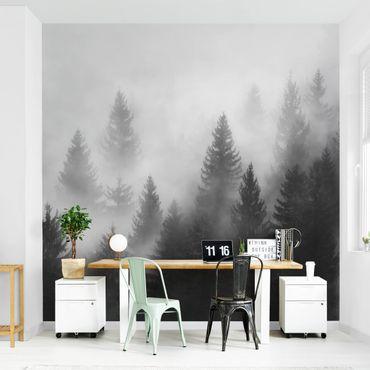 Carta da parati adesiva bosco - Foresta di conifere nella nebbia - Formato quadrato