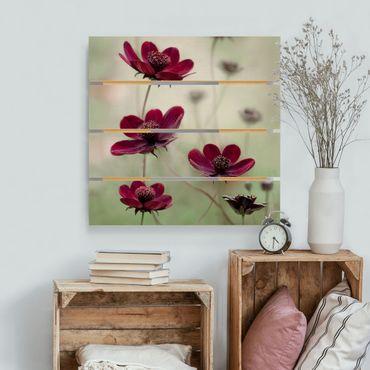 Stampa su legno - Rosa Kosmeen - Quadrato 1:1