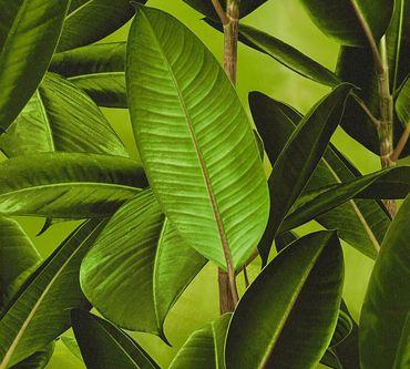 Carta da parati - Livingwalls Neue Bude 2.0 in Verde Marrone