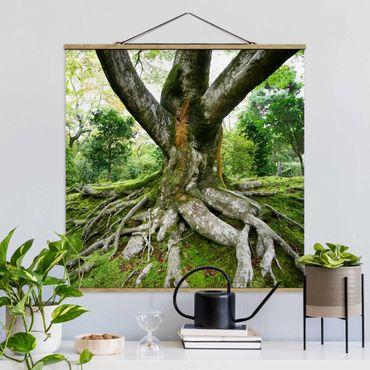 Foto su tessuto da parete con bastone - vecchio albero - Quadrato 1:1