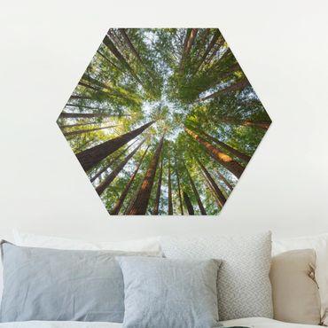 Esagono in Alu-dibond - Tops Sequoia