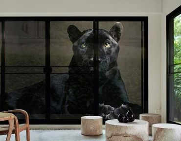 XXL Pellicola per vetri - Black Puma