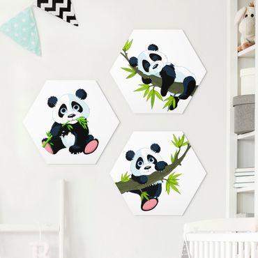 Esagono in forex - Panda Bear Set