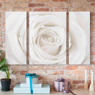 Stampa su tela 3 parti - Pretty White Rose - Trittico