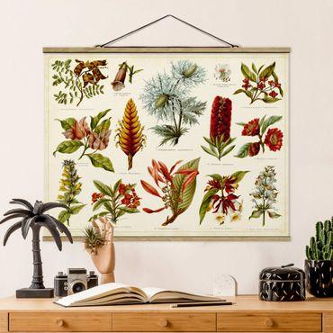 Foto su tessuto da parete con bastone - Consiglio d'epoca Tropical Botany I - Orizzontale 3:4